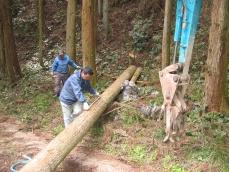 11月に伐採し4ヶ月間葉枯らした杉材です